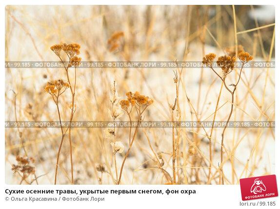 Сухие осенние травы, укрытые первым снегом, фон охра, фото № 99185, снято 29 апреля 2007 г. (c) Ольга Красавина / Фотобанк Лори