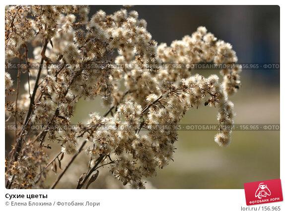 Сухие цветы, фото № 156965, снято 27 марта 2007 г. (c) Елена Блохина / Фотобанк Лори