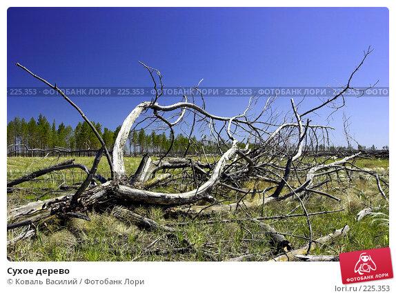 Сухое дерево, фото № 225353, снято 27 октября 2016 г. (c) Коваль Василий / Фотобанк Лори
