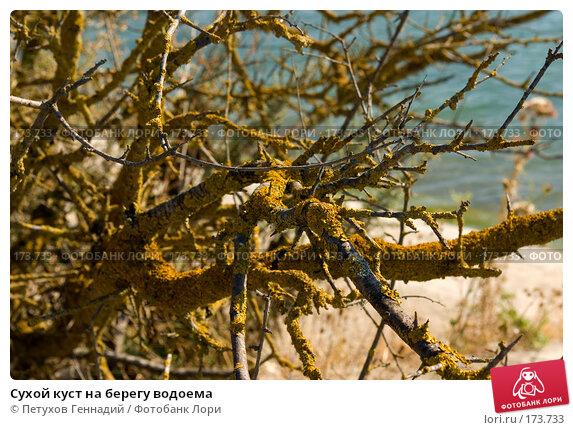 Купить «Сухой куст на берегу водоема», фото № 173733, снято 7 августа 2007 г. (c) Петухов Геннадий / Фотобанк Лори
