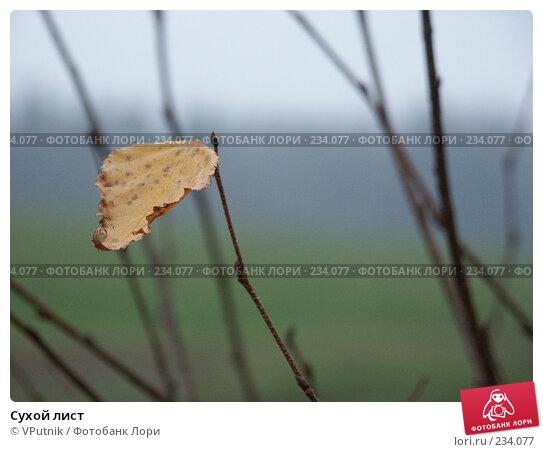 Сухой лист, фото № 234077, снято 5 ноября 2004 г. (c) VPutnik / Фотобанк Лори