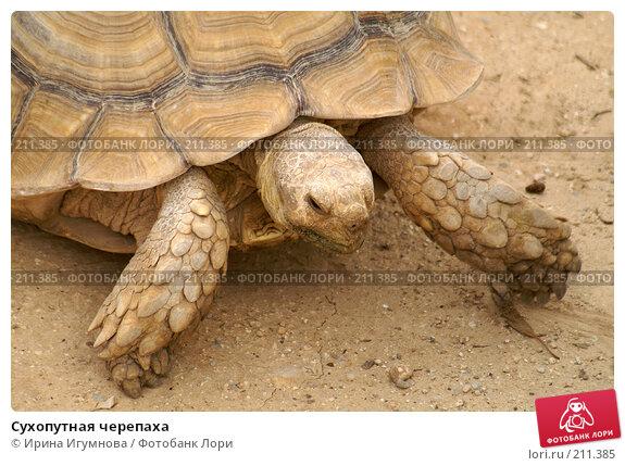 Сухопутная черепаха, фото № 211385, снято 9 июня 2006 г. (c) Ирина Игумнова / Фотобанк Лори