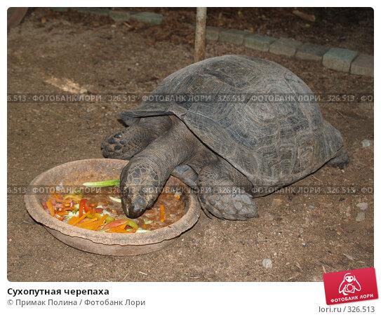 Сухопутная черепаха, фото № 326513, снято 13 августа 2007 г. (c) Примак Полина / Фотобанк Лори