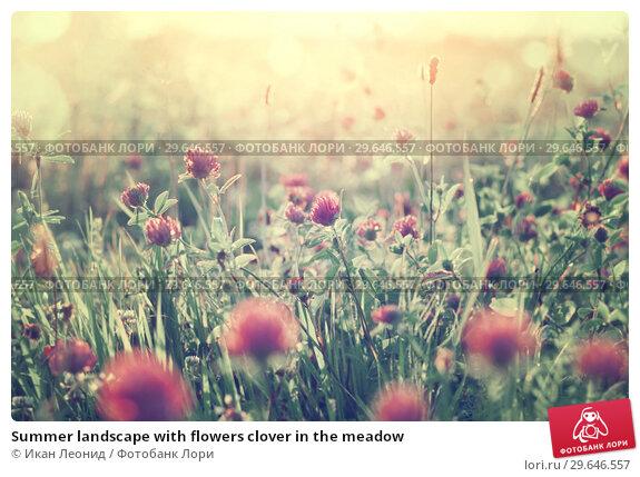 Купить «Summer landscape with flowers clover in the meadow», фото № 29646557, снято 15 августа 2018 г. (c) Икан Леонид / Фотобанк Лори