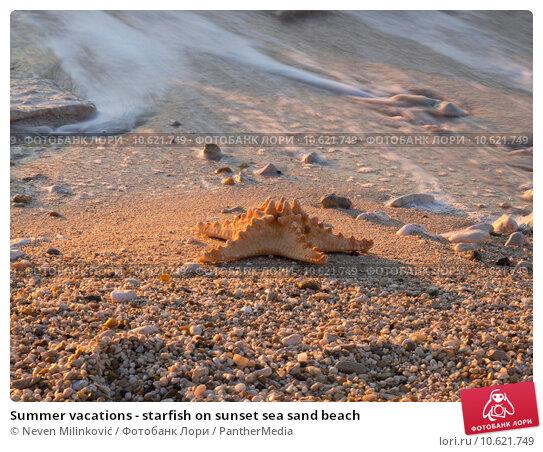 Summer vacations - starfish on sunset sea sand beach. Стоковое фото, фотограф Neven Milinković / PantherMedia / Фотобанк Лори