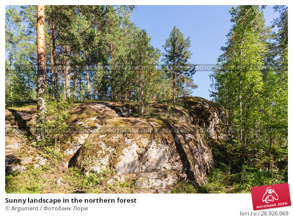 Купить «Sunny landscape in the northern forest», фото № 28926069, снято 18 июля 2018 г. (c) Argument / Фотобанк Лори