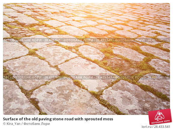 Купить «Surface of the old paving stone road with sprouted moss», фото № 28433541, снято 27 января 2018 г. (c) Kira_Yan / Фотобанк Лори