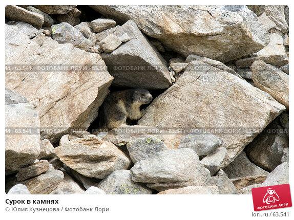 Сурок в камнях, фото № 63541, снято 17 июня 2007 г. (c) Юлия Кузнецова / Фотобанк Лори