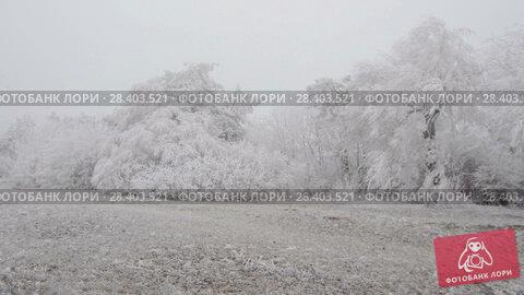 Купить «Surrealistic mountain glade. Windy weather, trees covered with hoarfrost.», видеоролик № 28403521, снято 27 марта 2018 г. (c) Андрей Радченко / Фотобанк Лори