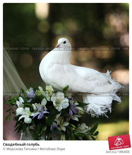 Свадебный голубь, фото № 149833, снято 18 августа 2007 г. (c) Морозова Татьяна / Фотобанк Лори