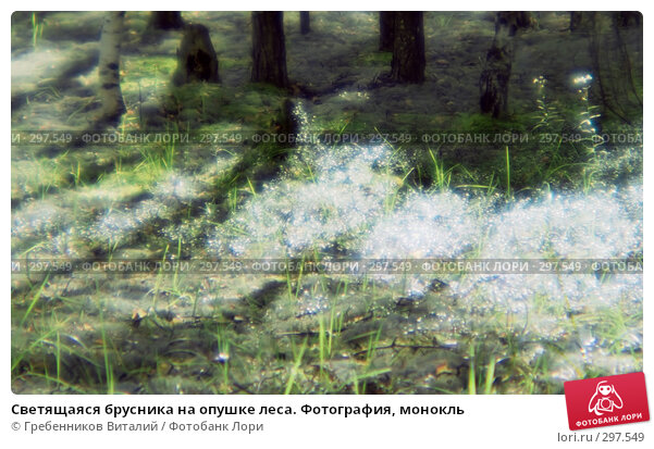Светящаяся брусника на опушке леса. Фотография, монокль, фото № 297549, снято 26 октября 2016 г. (c) Гребенников Виталий / Фотобанк Лори