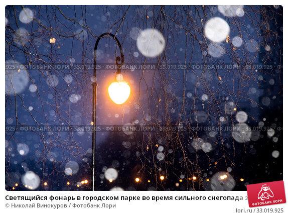 Купить «Светящийся фонарь в городском парке во время сильного снегопада зимой», фото № 33019925, снято 2 февраля 2020 г. (c) Николай Винокуров / Фотобанк Лори