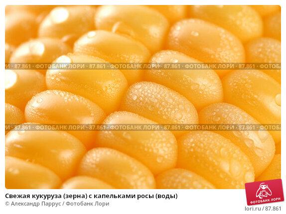 Свежая кукуруза (зерна) с капельками росы (воды), фото № 87861, снято 18 сентября 2007 г. (c) Александр Паррус / Фотобанк Лори