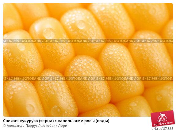 Свежая кукуруза (зерна) с капельками росы (воды), фото № 87865, снято 18 сентября 2007 г. (c) Александр Паррус / Фотобанк Лори