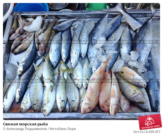 Купить свежую рыбу оптом в екатеринбурге