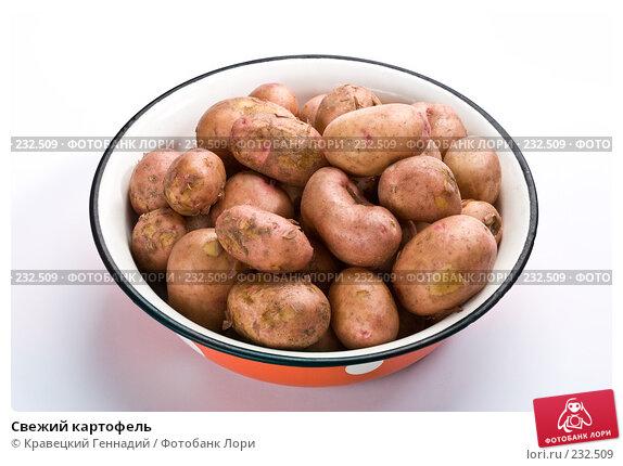 Купить «Свежий картофель», фото № 232509, снято 17 июля 2005 г. (c) Кравецкий Геннадий / Фотобанк Лори
