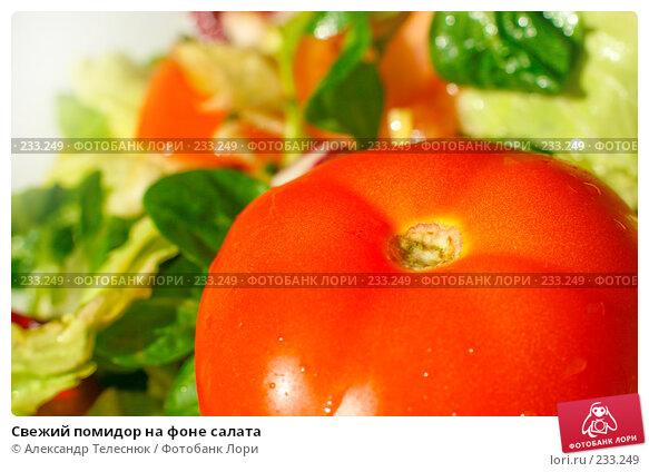 Свежий помидор на фоне салата, фото № 233249, снято 28 января 2008 г. (c) Александр Телеснюк / Фотобанк Лори