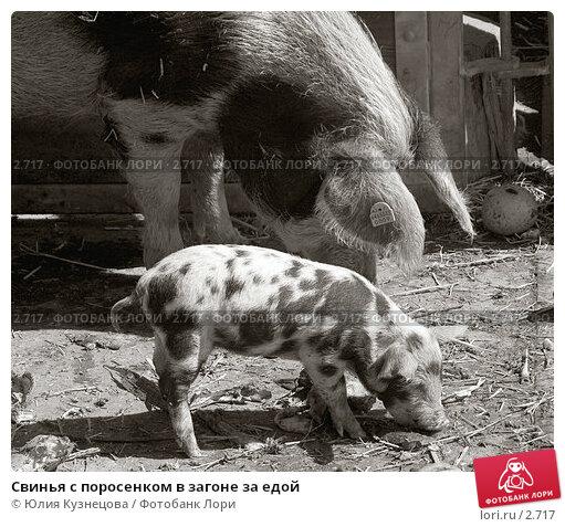 Свинья с поросенком в загоне за едой, фото № 2717, снято 23 июля 2017 г. (c) Юлия Кузнецова / Фотобанк Лори