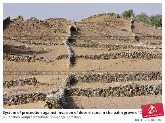 System of protection against invasion of desert sand in the palm grove of Zagora, Draa River valley, Province of Zagora, Region Draa-Tafilalet, Morocco, North West Africa. Стоковое фото, фотограф Christian Goupi / age Fotostock / Фотобанк Лори