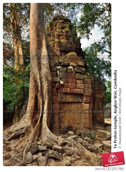Купить «Ta Prohm temple, Angkor Wat, Cambodia», фото № 27271793, снято 28 декабря 2011 г. (c) Знаменский Олег / Фотобанк Лори