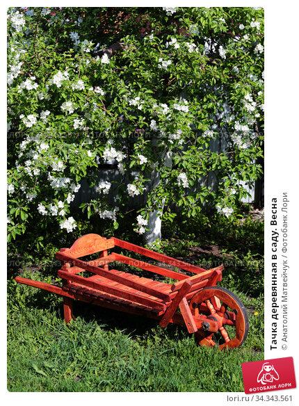 Тачка деревянная в саду. Весна. Стоковое фото, фотограф Анатолий Матвейчук / Фотобанк Лори