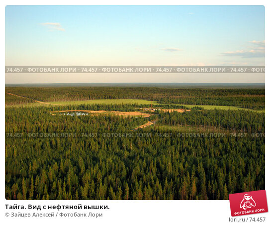 Тайга. Вид с нефтяной вышки., фото № 74457, снято 4 июля 2007 г. (c) Зайцев Алексей / Фотобанк Лори