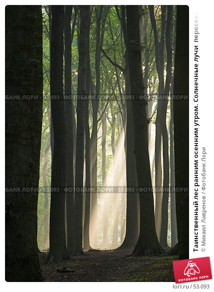 Таинственный лес ранним осенним утром. Солнечные лучи  пересекают пространство, фото № 53093, снято 19 августа 2017 г. (c) Михаил Лавренов / Фотобанк Лори