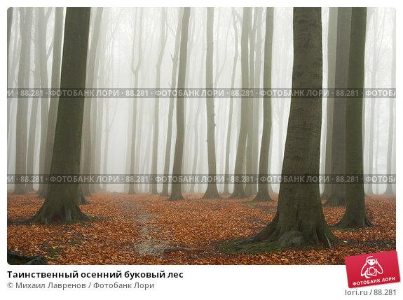 Таинственный осенний буковый лес, фото № 88281, снято 30 ноября 2006 г. (c) Михаил Лавренов / Фотобанк Лори