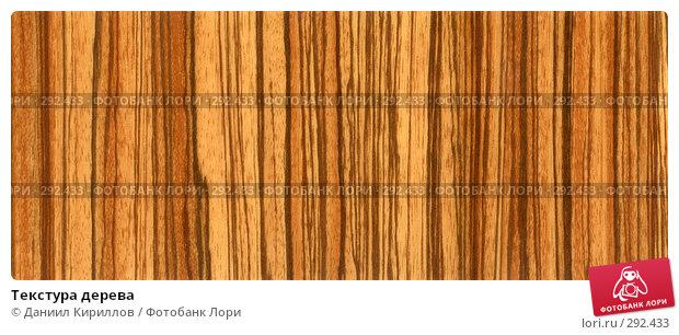 Купить «Текстура дерева», фото № 292433, снято 23 ноября 2017 г. (c) Даниил Кириллов / Фотобанк Лори