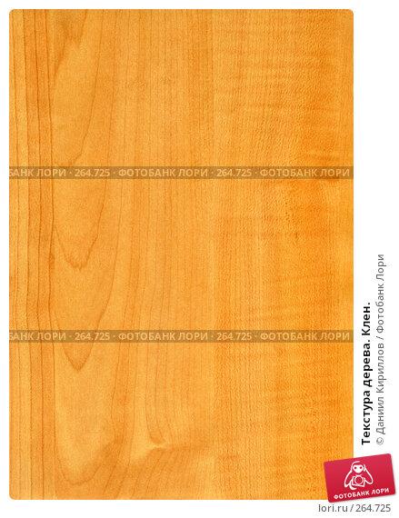 Текстура дерева. Клен., фото № 264725, снято 27 июня 2017 г. (c) Даниил Кириллов / Фотобанк Лори