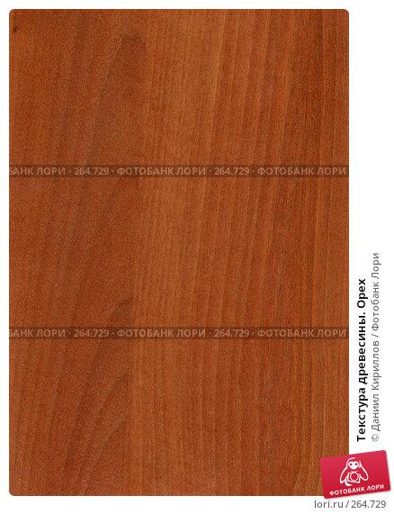 Текстура древесины. Орех, фото № 264729, снято 25 апреля 2017 г. (c) Даниил Кириллов / Фотобанк Лори