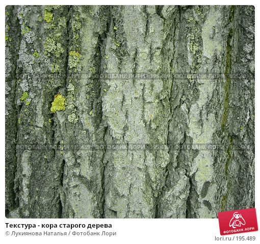 Текстура - кора старого дерева, фото № 195489, снято 5 февраля 2008 г. (c) Лукиянова Наталья / Фотобанк Лори