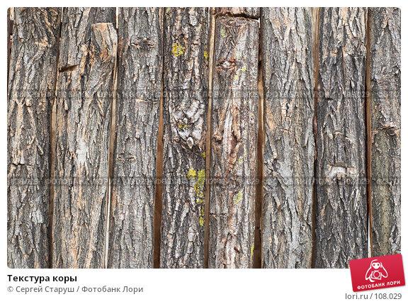 Купить «Текстура коры», фото № 108029, снято 11 января 2007 г. (c) Сергей Старуш / Фотобанк Лори