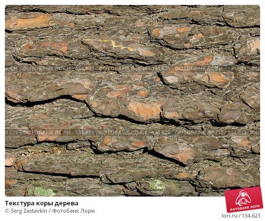 Текстура коры дерева, фото № 134621, снято 2 октября 2005 г. (c) Serg Zastavkin / Фотобанк Лори