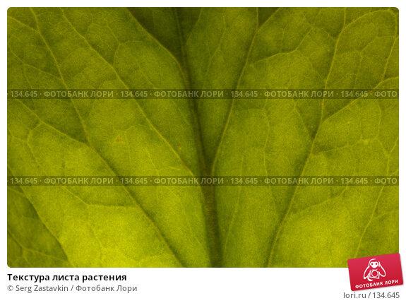 Купить «Текстура листа растения», фото № 134645, снято 15 августа 2006 г. (c) Serg Zastavkin / Фотобанк Лори