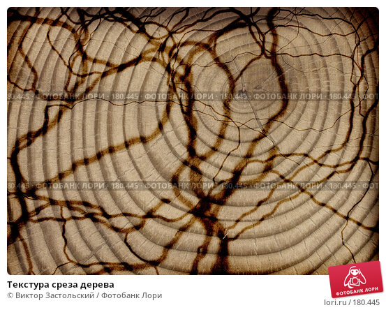 Текстура среза дерева, фото № 180445, снято 27 октября 2016 г. (c) Виктор Застольский / Фотобанк Лори