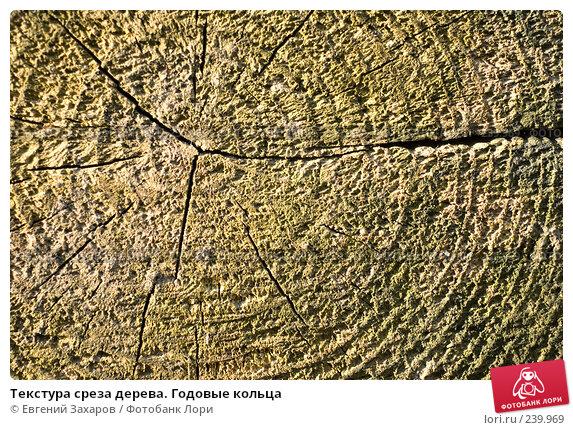 Текстура среза дерева. Годовые кольца, фото № 239969, снято 28 марта 2008 г. (c) Евгений Захаров / Фотобанк Лори