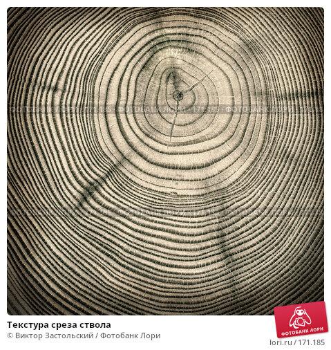Текстура среза ствола, фото № 171185, снято 24 января 2017 г. (c) Виктор Застольский / Фотобанк Лори