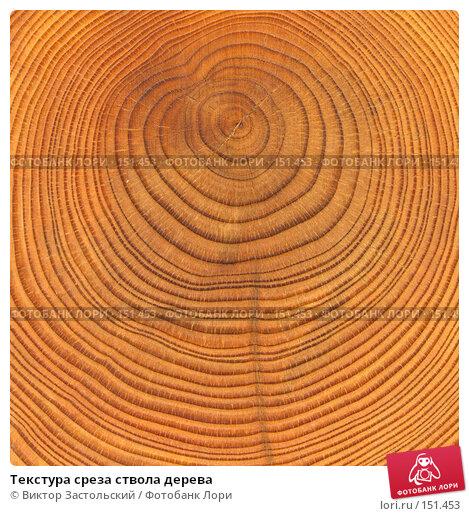 Текстура среза ствола дерева, фото № 151453, снято 17 января 2017 г. (c) Виктор Застольский / Фотобанк Лори