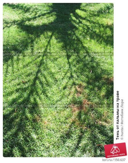 Тень от пальмы на траве, фото № 150637, снято 24 сентября 2007 г. (c) hunta / Фотобанк Лори