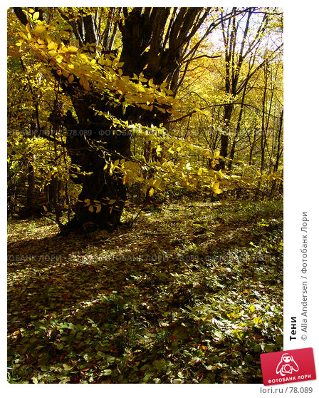 Купить «Тени», фото № 78089, снято 25 октября 2006 г. (c) Alla Andersen / Фотобанк Лори