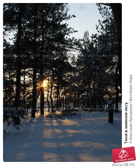 Купить «Тени в зимнем лесу», фото № 98173, снято 31 января 2007 г. (c) Анастасия Лукьянова / Фотобанк Лори