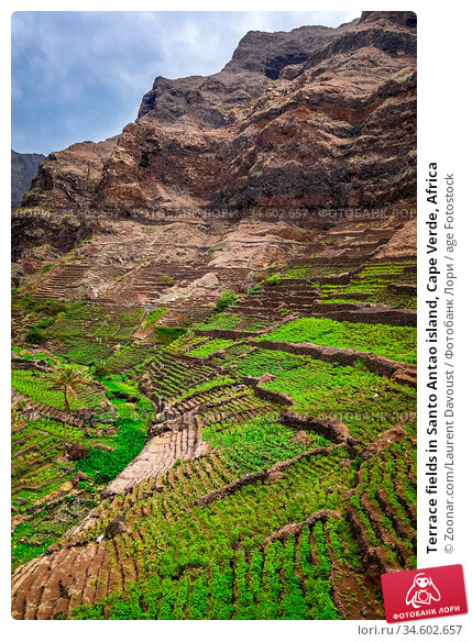 Terrace fields in Santo Antao island, Cape Verde, Africa. Стоковое фото, фотограф Zoonar.com/Laurent Davoust / age Fotostock / Фотобанк Лори