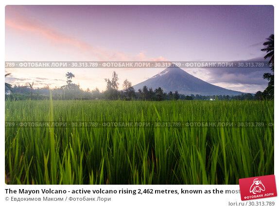 Купить «The Mayon Volcano - active volcano rising 2,462 metres, known as the most perfectly cone-shaped volcano», фото № 30313789, снято 24 февраля 2019 г. (c) Евдокимов Максим / Фотобанк Лори