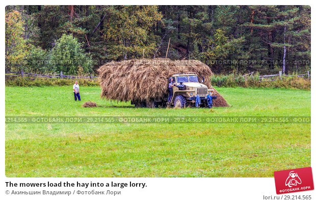 Купить «The mowers load the hay into a large lorry.», фото № 29214565, снято 7 сентября 2017 г. (c) Акиньшин Владимир / Фотобанк Лори