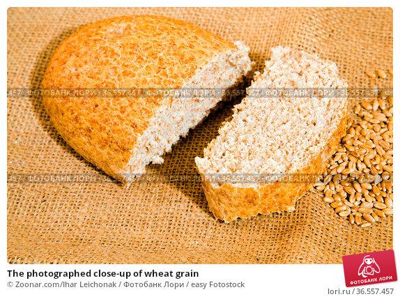The photographed close-up of wheat grain. Стоковое фото, фотограф Zoonar.com/Ihar Leichonak / easy Fotostock / Фотобанк Лори