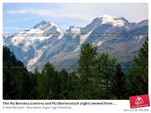 The Piz Bernina (centre) and Piz Morteratsch (right) viewed from ... Стоковое фото, фотограф Neil Harrison / age Fotostock / Фотобанк Лори
