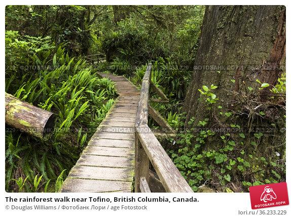 The rainforest walk near Tofino, British Columbia, Canada. Стоковое фото, фотограф Douglas Williams / age Fotostock / Фотобанк Лори