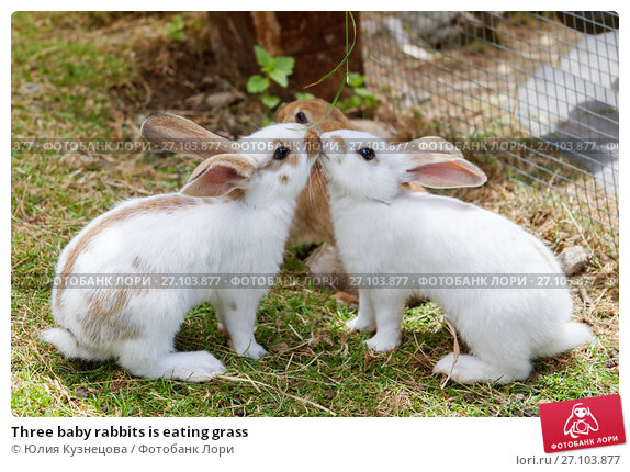 Купить «Three baby rabbits is eating grass», фото № 27103877, снято 20 июля 2017 г. (c) Юлия Кузнецова / Фотобанк Лори