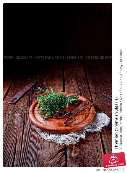 Thymian (Thymus vulgaris). Стоковое фото, фотограф Zoonar.com/Darius Dzinnik / easy Fotostock / Фотобанк Лори